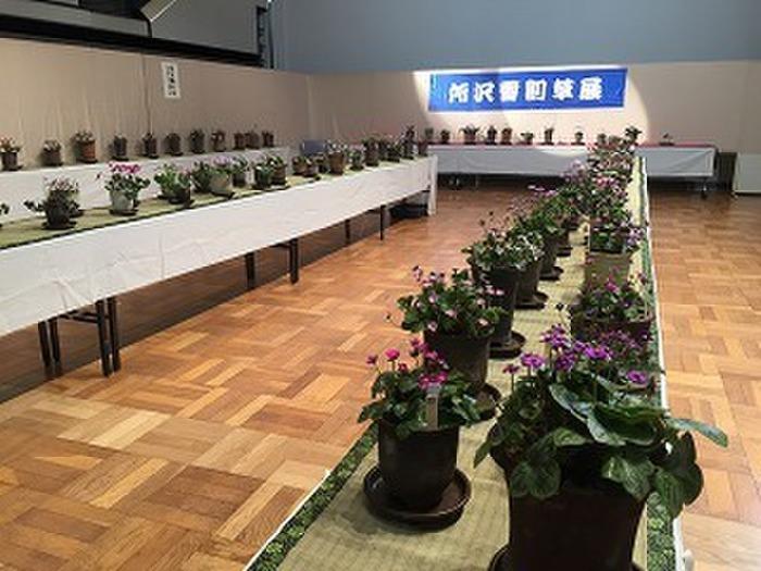 雪割草愛好会展示会 - ところの花情報 -